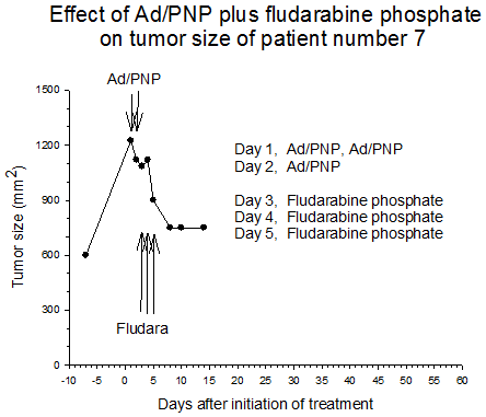 Figure 1 Effect of AD/PNP plus fludarabine phosphate on tumor size of patient number 7