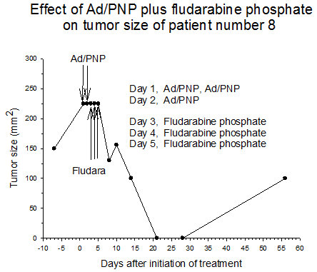 Figure 2 Effect of AD/PNP plus fludarabine phosphate on tumor size of patient number 8