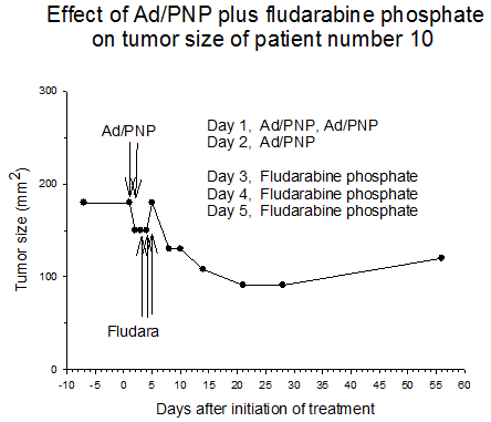 Figure 4 Effect of AD/PNP plus fludarabine phosphate on tumor size of patient number 10