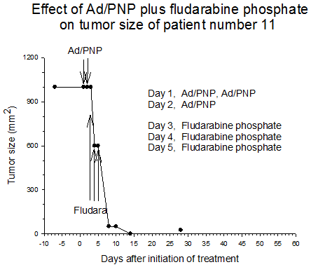 Figure 5 Effect of AD/PNP plus fludarabine phosphate on tumor size of patient number 11